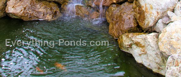 goldfish ponds header