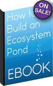 How to Build an Ecosystem Pond