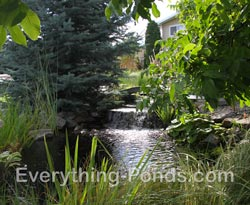 natural pond designs
