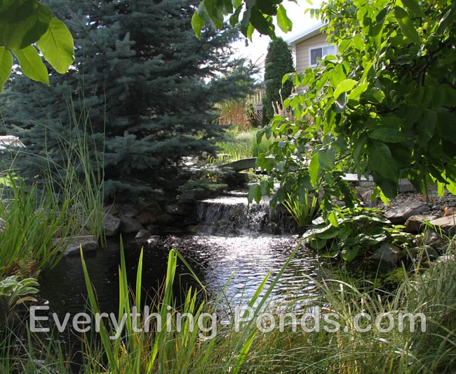 Pond designs everything for Natural fish pond