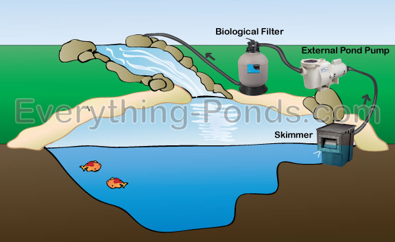 Choosing A Pond Skimmer Everything Ponds Com