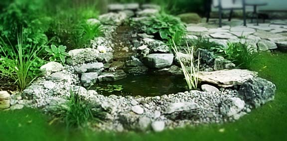 Small backyard ponds everything for Pond ideas for small yards