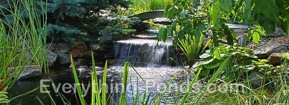 Water Garden Ponds
